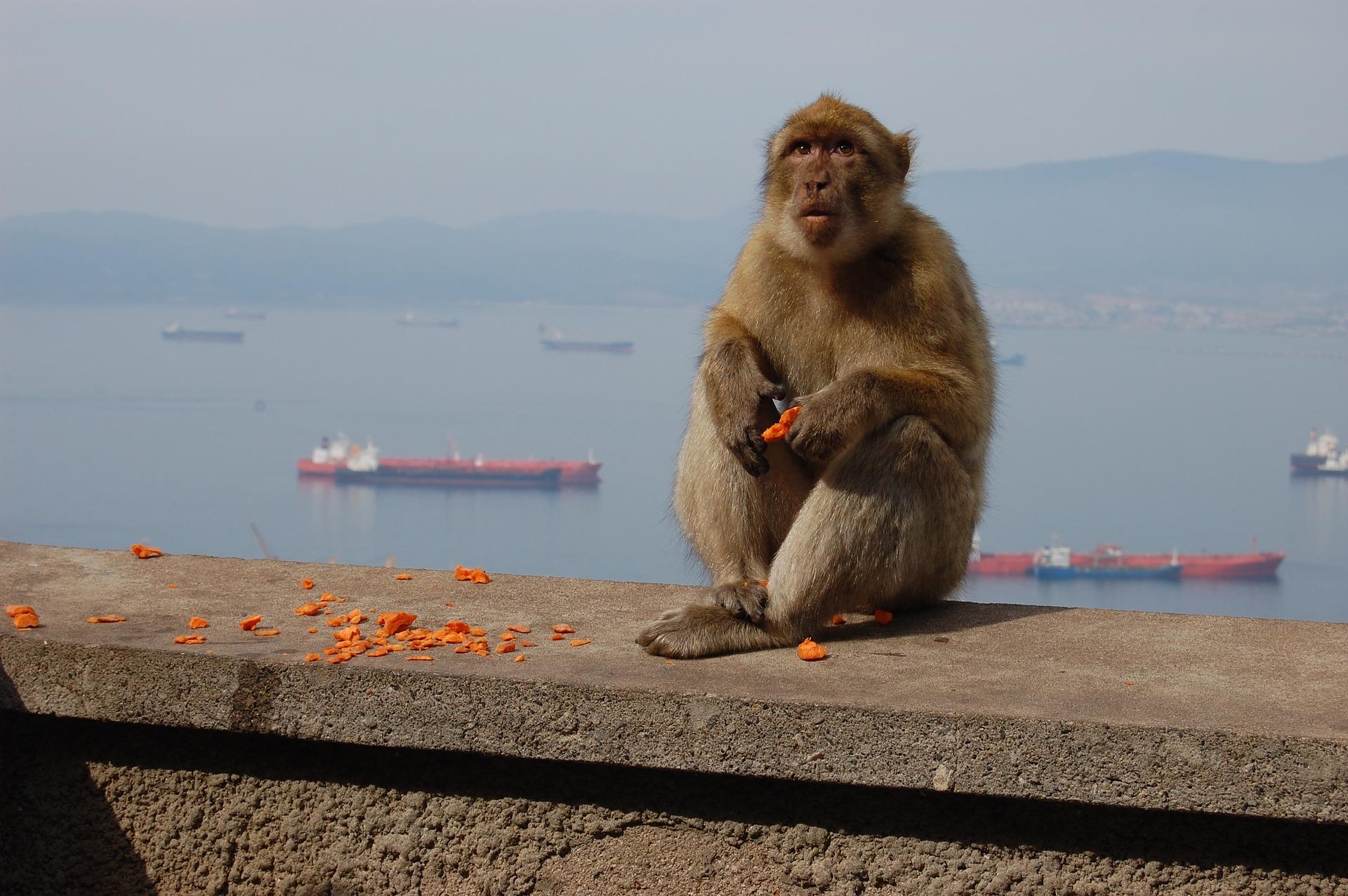 monkey-1437397_1920